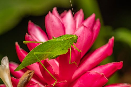 Free stock photo of flower, insect, macro, macro photography