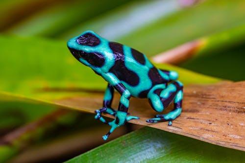 Free stock photo of amphibian, frog, macro, macro photography