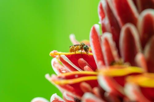 Gratis arkivbilde med blomst, insekt, makro, makrofotografering