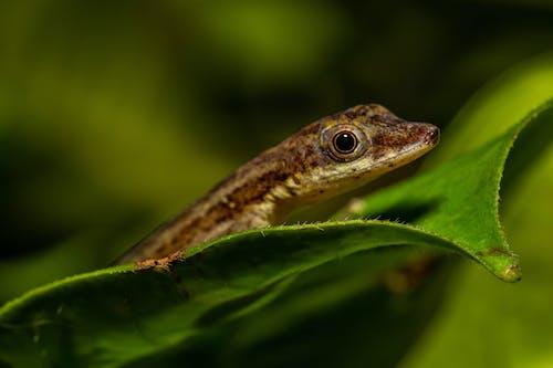 Free stock photo of lizard, macro, macro photography, nature