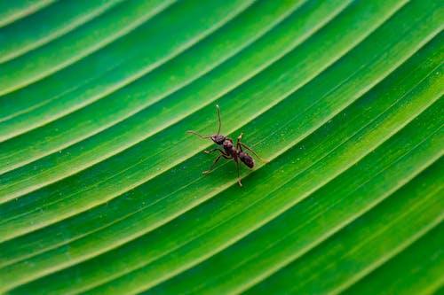 Gratis arkivbilde med blad, farge, insekt, makro