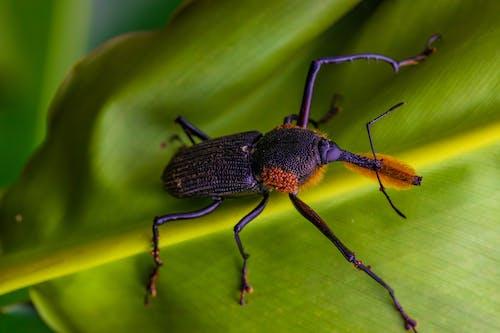 綠葉上的黑色昆蟲