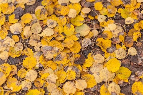 Foto stok gratis alam, alami, bagus, Birch