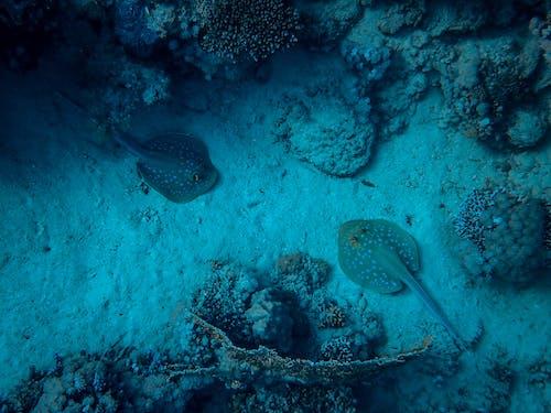 Kostenloses Stock Foto zu fisch, koralle, meer, ozean