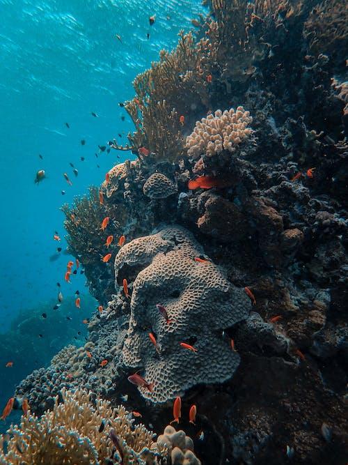 Gratis lagerfoto af akvarium, dyb, fisk, hav