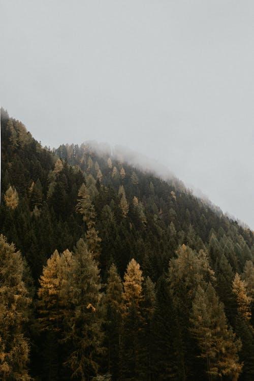 Foto d'estoc gratuïta de alba, arbres, boira, bromós
