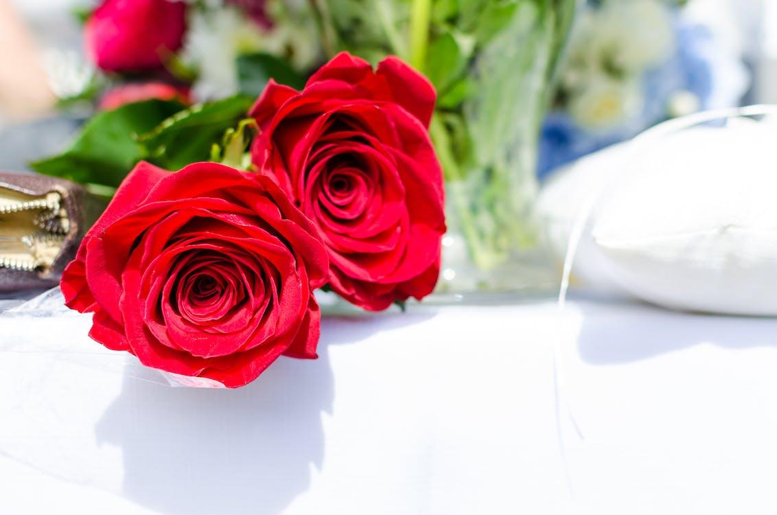 amor, enamorat, flor