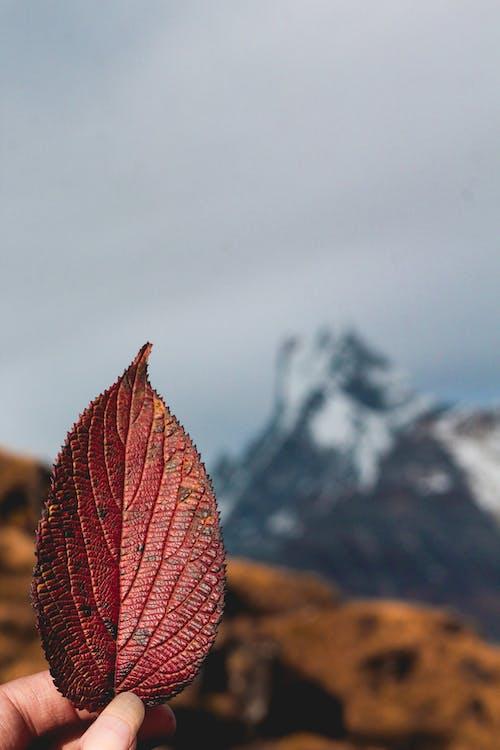 คลังภาพถ่ายฟรี ของ macchapuchure, ตก, ตะวันลับฟ้า, ภูเขายักษ์
