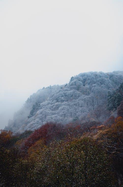 Základová fotografie zdarma na téma kouř, les, mlha, padání