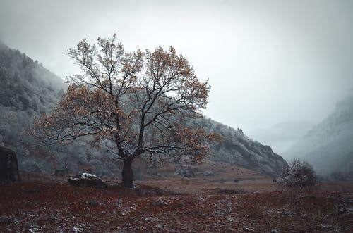 A Tree With Autumn Leaves At The Foot Of A Hill