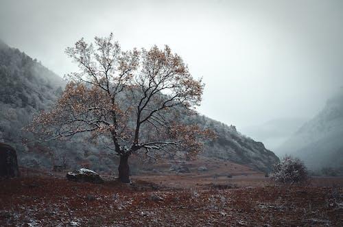 下落, 公園, 冬季, 原本 的 免费素材照片