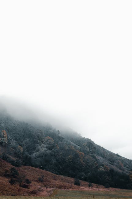Low angle shot of a mountain with lush vegetation covered in thick fog