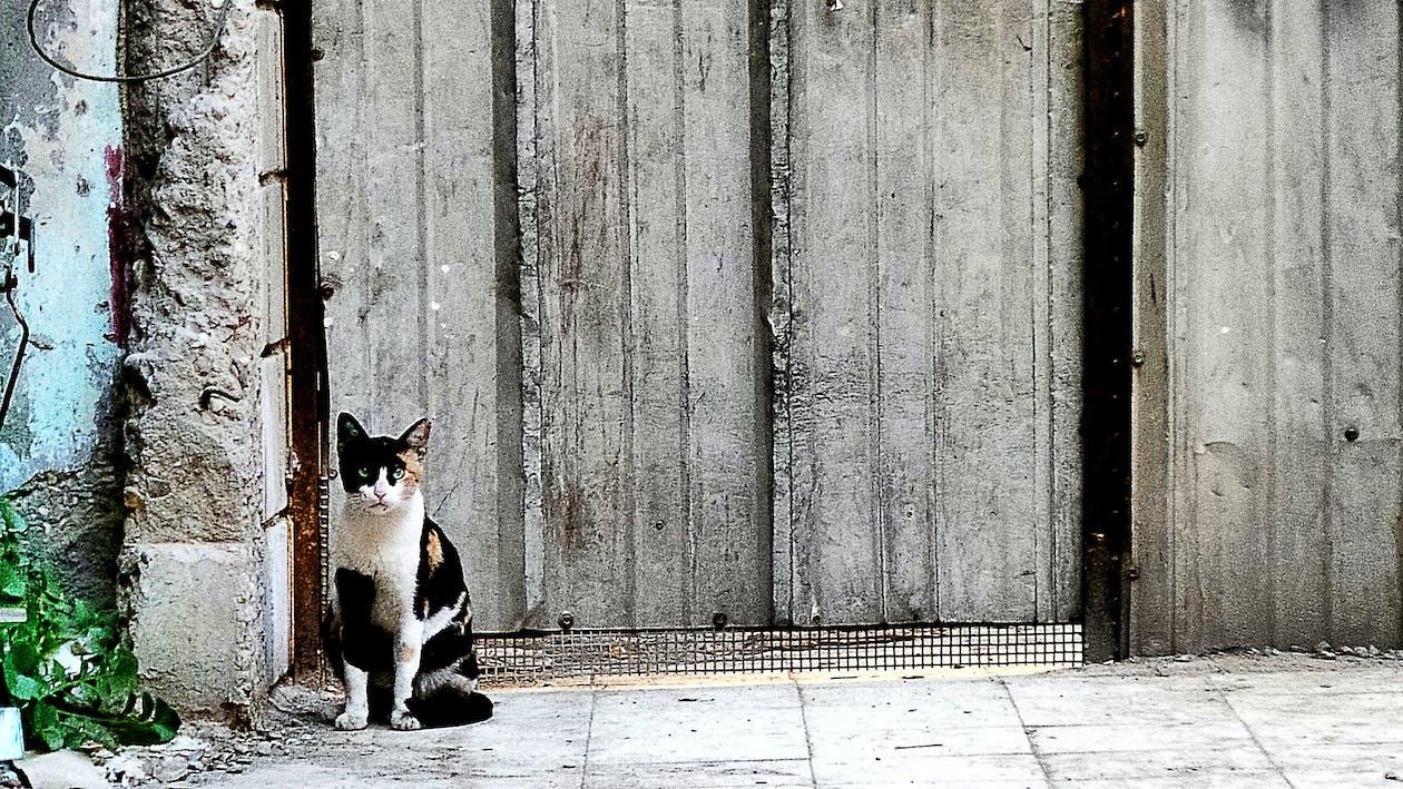 Free stock photo of animal farming, animal photography, cat