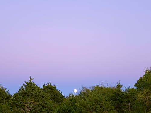 Free stock photo of moon, nautre, sky, trees
