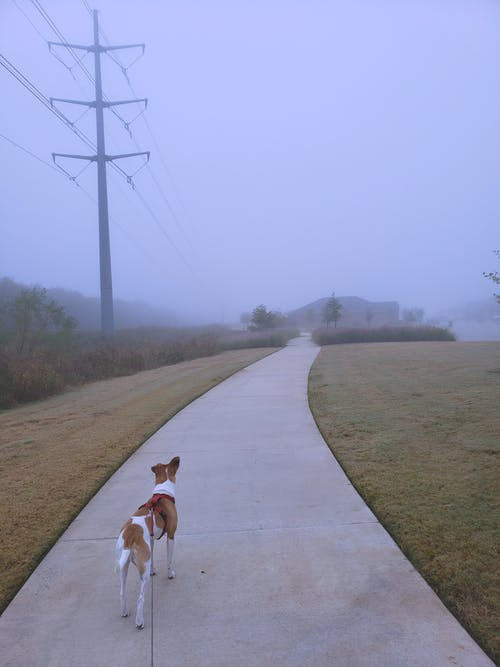 Free stock photo of dog, fog, Foggy landscape, foggy morning
