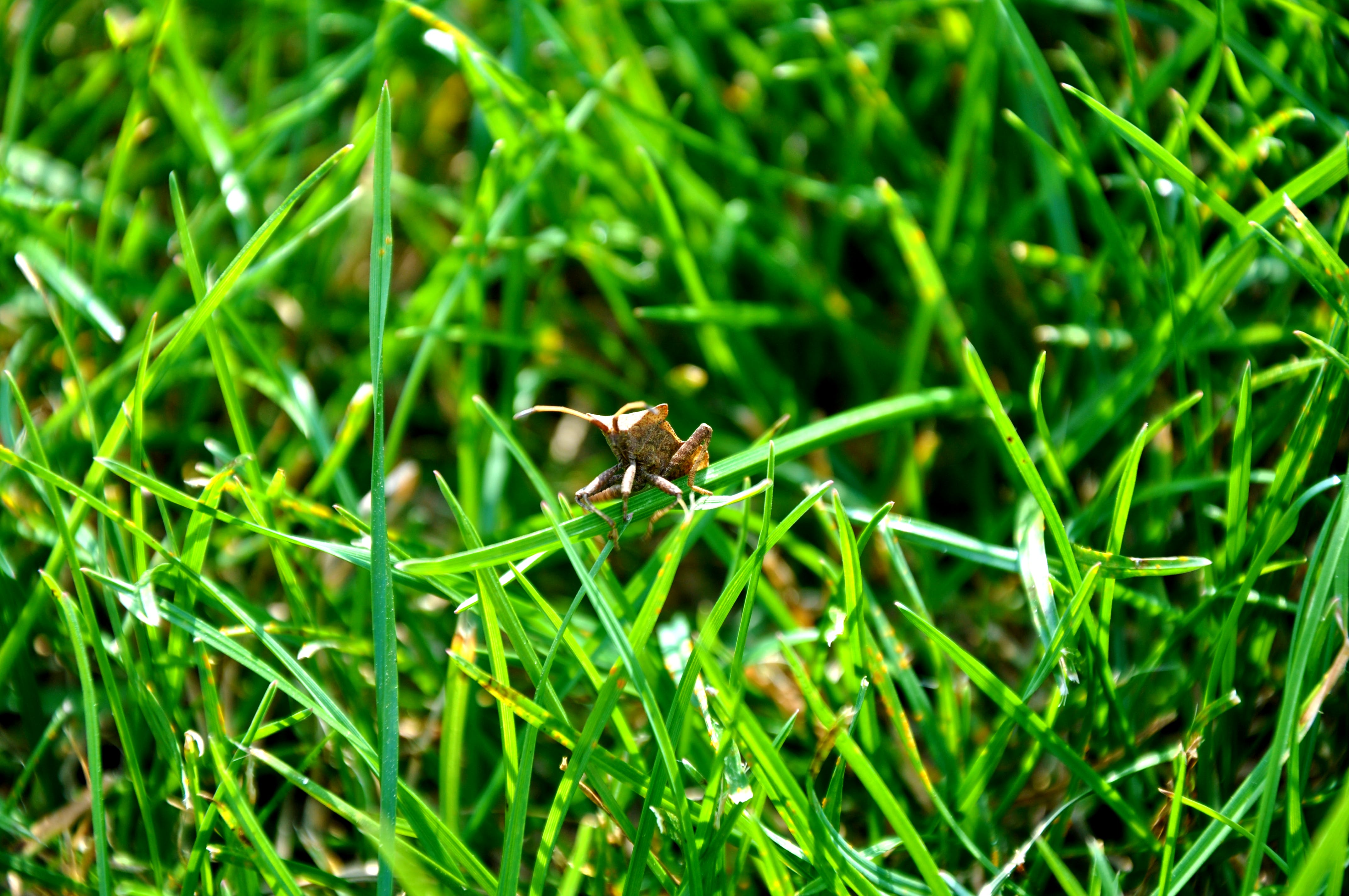 Free stock photo of green grass, insect