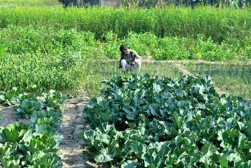 农民, 印度, 印度人 的 免费素材图片