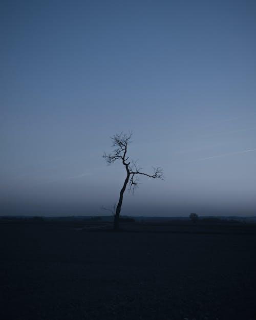 Gratis lagerfoto af aften, bladløse, landskab, morgengry