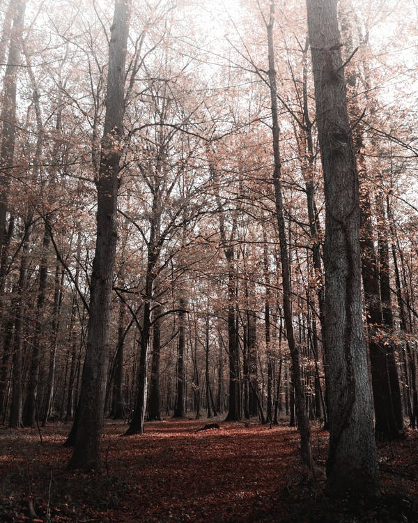 Low Angle Shot Of Trees With Autumn Foliage In Woods