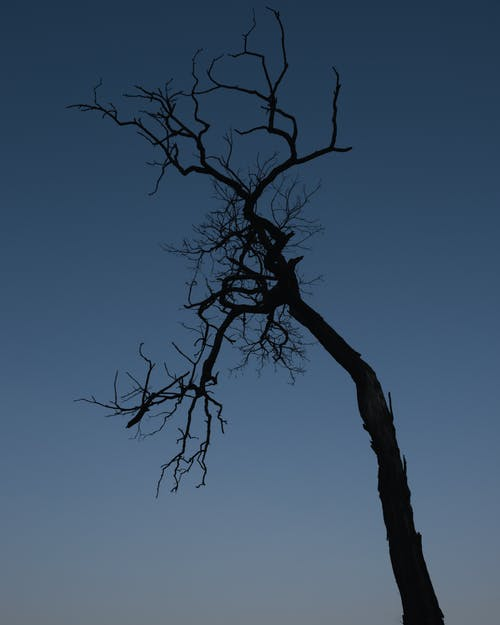 ağaç, ağaç gövdesi, akşam karanlığı, ay içeren Ücretsiz stok fotoğraf