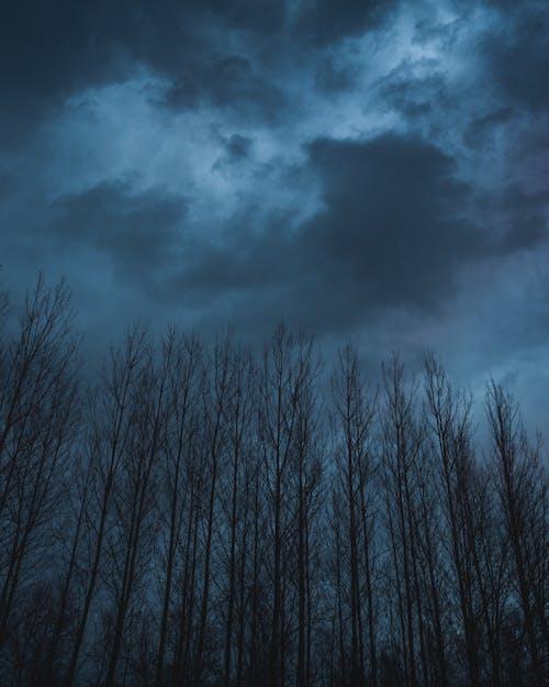 ağaçlar, bulutlar, fırtına, mavi içeren Ücretsiz stok fotoğraf