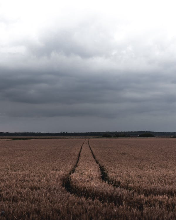 agrikultura, angin ribut, angin topan