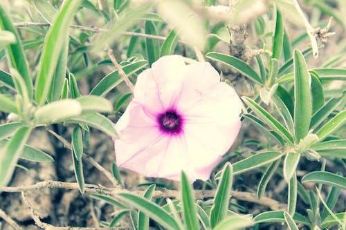 Gratis lagerfoto af lilla blomst