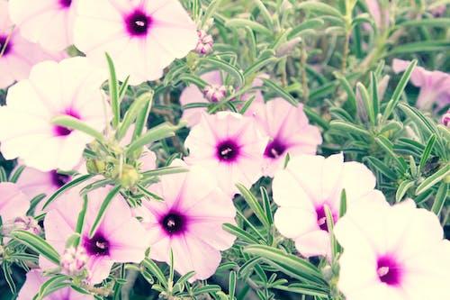 Gratis lagerfoto af lilla blomster, smuk blomst