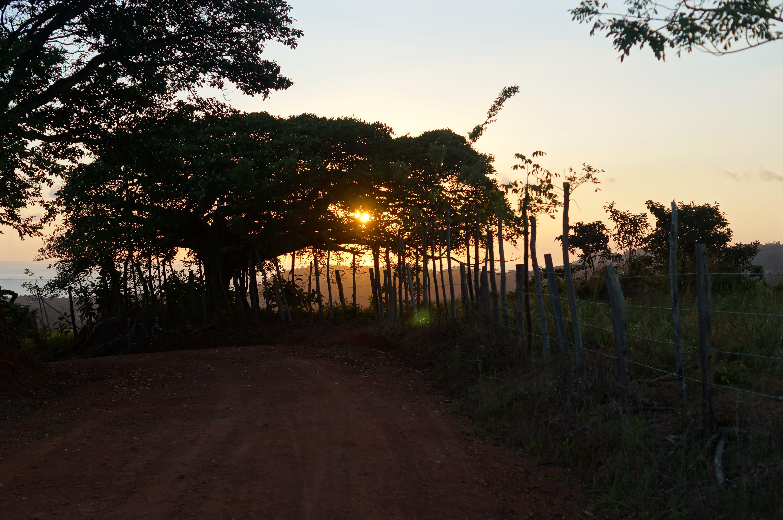 Free stock photo of Costa Rica, sunset, tree