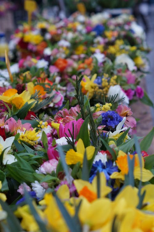 Free stock photo of bright colours, farmers market, flower, flower market