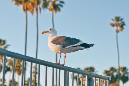 Photo Of Bird Perched On Handrail