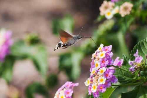 Butterfly feeding colorful blooming flower nectar in garden in summer