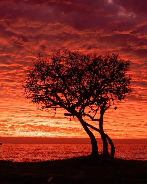 Ảnh lưu trữ miễn phí về atardecer, bầu trời buổi tối, biển, bóng