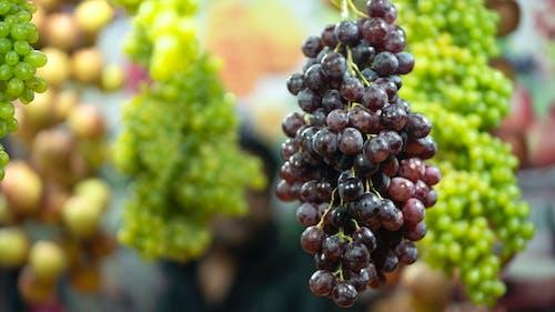 Бесплатное стоковое фото с fruites, md towhidul ислам, towhid, бангладеша