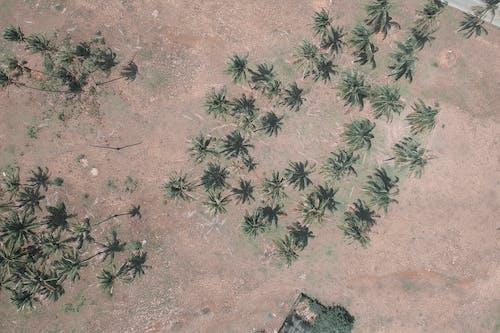 Foto profissional grátis de aerofotografia, ao ar livre, areia, árvores