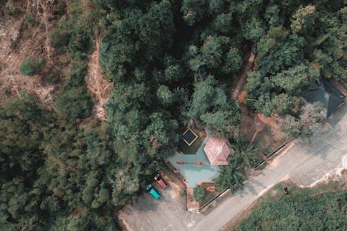 Kostnadsfri bild av fågelperspektiv, från ovan, luftskott, skog