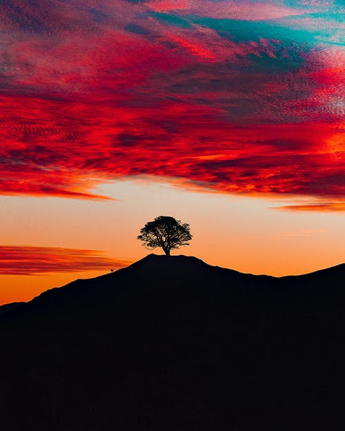 Silhouette View of Tree Under Red Sky