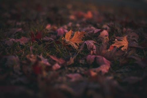 Photos gratuites de amour, automne, coucher de soleil, coucher du soleil