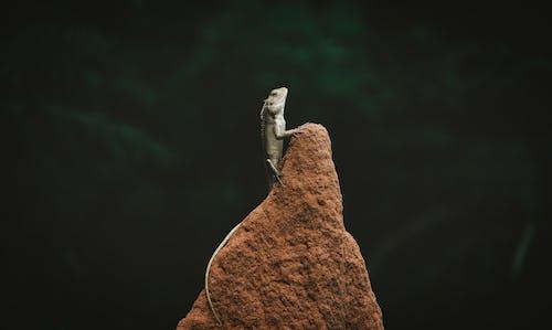 Δωρεάν στοκ φωτογραφιών με rock, αναρρίχηση, ερπετό, Πλάγια όψη