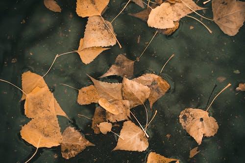 Brown Leaves on Water