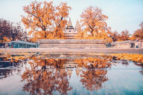 Immagine gratuita di acqua, alberi, autunno, cadere