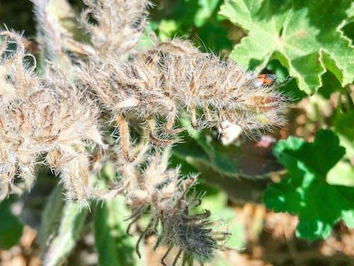 bitki, bitki örtüsü, böcek, çiçek içeren Ücretsiz stok fotoğraf
