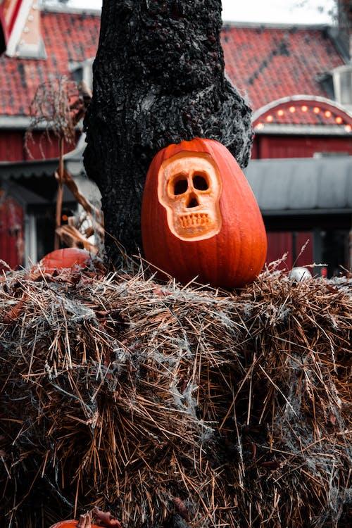 Kostenloses Stock Foto zu feier, halloween, halloween-kürbis, heu
