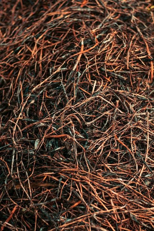 Ảnh lưu trữ miễn phí về khô, lá đậu, lá mùa thu, màu mùa thu
