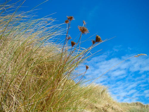 Free stock photo of dunes, grass, ireland, summer