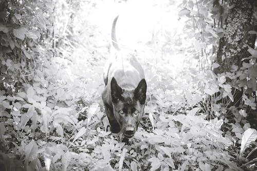 Free stock photo of black and white, cute, dog, doggo