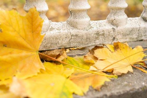 Ingyenes stockfotó őszi hangulat, őszi levelek, őszi színek, sárga témában