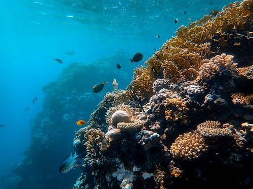Imagine de stoc gratuită din adânc, adâncime, anemonă de mare, animale acvatice