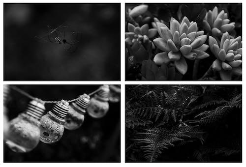คลังภาพถ่ายฟรี ของ ขาว, ซักคิวเลนต์, ดำ, น้ำ