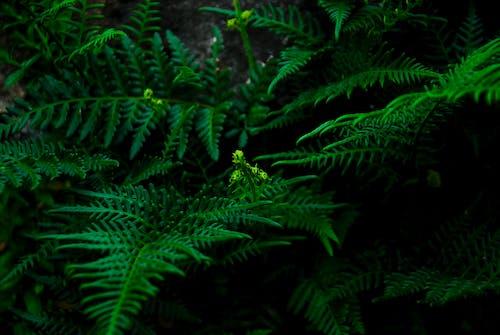 คลังภาพถ่ายฟรี ของ พืช, สวน, สีเขียว, เฟิร์น